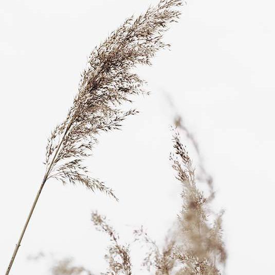 Desenio Grass