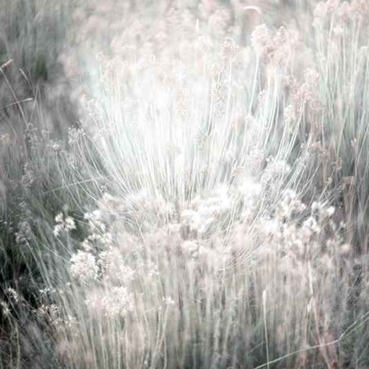 Desenio Summer Grass