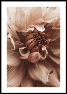 Earth Flower from £6.95